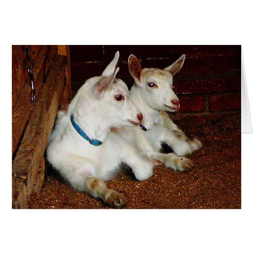 Dos cabras del bebé tarjeta de felicitación