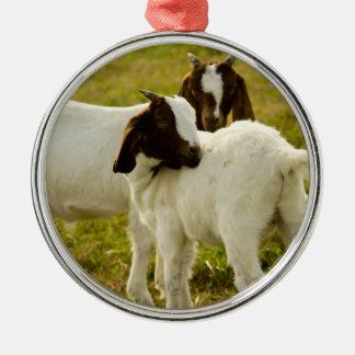 Dos cabras ornamento de reyes magos