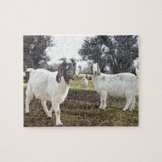 Dos cabras rompecabezas con fotos