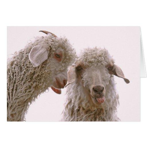 Dos cabras tontas felicitacion