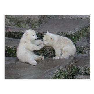 Dos cachorros del oso polar postales