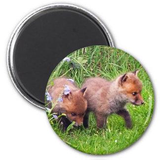 dos cachorros del zorro imanes para frigoríficos