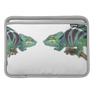 Dos camaleones de la pantera Nosy sean (Furcifer) Fundas MacBook