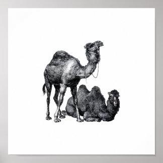 Dos camellos una situación una que miente abajo di póster
