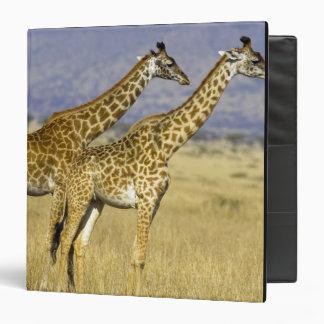 Dos camelopardalis del Giraffa de las jirafas del