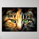 Dos-Cara del gatito Poster