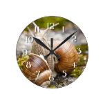 Dos caracoles reloj