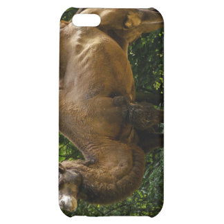 Dos caso del iPhone 4 del camello de Humped