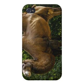 Dos caso del iPhone 4 del camello de Humped iPhone 4 Funda