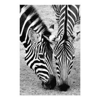 Dos cebras - impresión blanco y negro de la foto fotografía