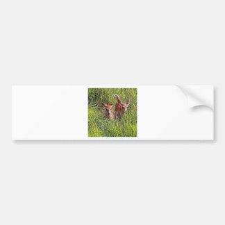 Dos ciervos de la cola blanca pegatina para auto