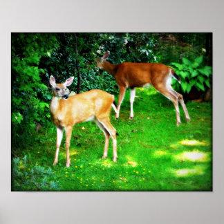 Dos ciervos en el poster del jardín