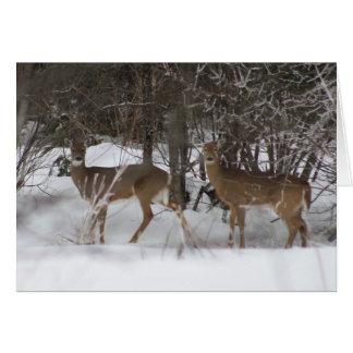 Dos ciervos en un paseo del invierno tarjeta de felicitación