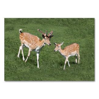 Dos ciervos jovenes