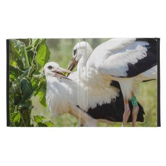 Dos cigüeñas jovenes fotografía del animal de los