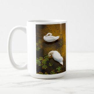 Dos cisnes con la reflexión del sol en el agua taza de café