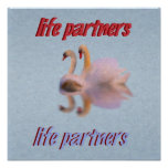 Dos cisnes que nadan junto poster