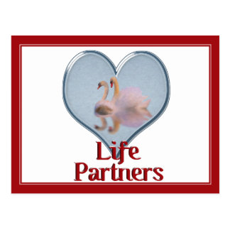 "Dos cisnes que nadan w/text ""vida Partners "" Postales"