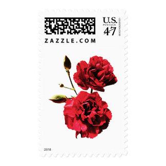 Dos claveles rojos con los brotes sellos postales