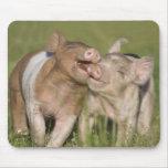 Dos cochinillos felices tapetes de raton