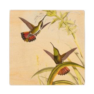 Dos colibríes coloridos que apuntan para la misma posavasos de arce