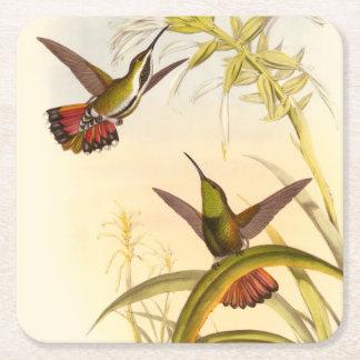 Dos colibríes coloridos que apuntan para la misma posavasos de cartón cuadrado