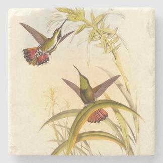Dos colibríes coloridos que apuntan para la misma posavasos de piedra