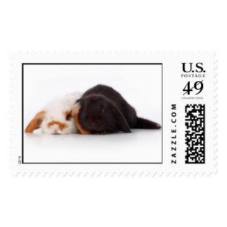 Dos conejitos lindos del bebé timbres postales