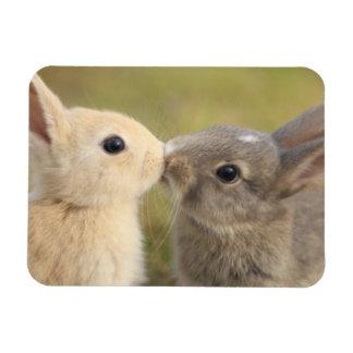 Dos conejitos que besan el imán del rectángulo