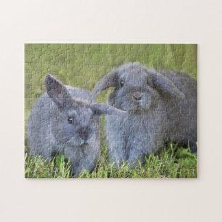 Dos conejos de conejito grises de Holanda Lop del  Puzzle Con Fotos