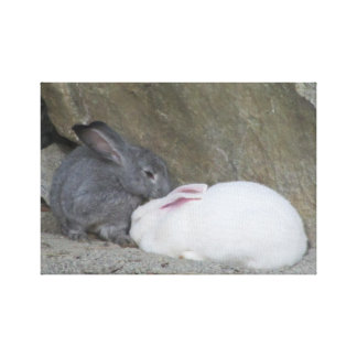 Dos conejos de conejito lindos impresiones en lona estiradas
