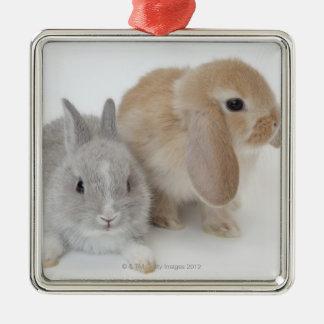 Dos conejos. Enano y Holanda Lop. de Netherland Adorno