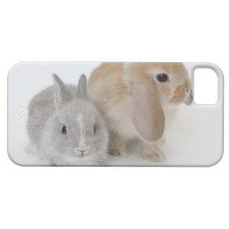 Dos conejos. Enano y Holanda Lop. de Netherland iPhone 5 Funda