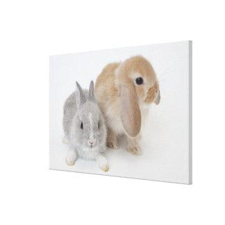 Dos conejos. Enano y Holanda Lop. de Netherland Impresión En Lona Estirada