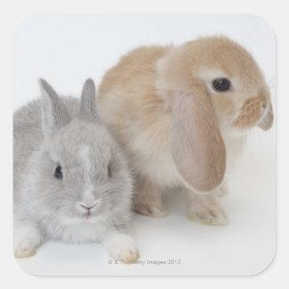 Dos conejos. Enano y Holanda Lop. de Netherland Pegatina Cuadrada