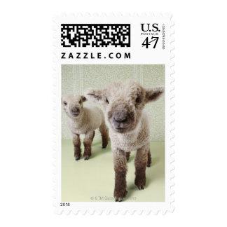 Dos corderos dentro con el papel pintado floral sello postal