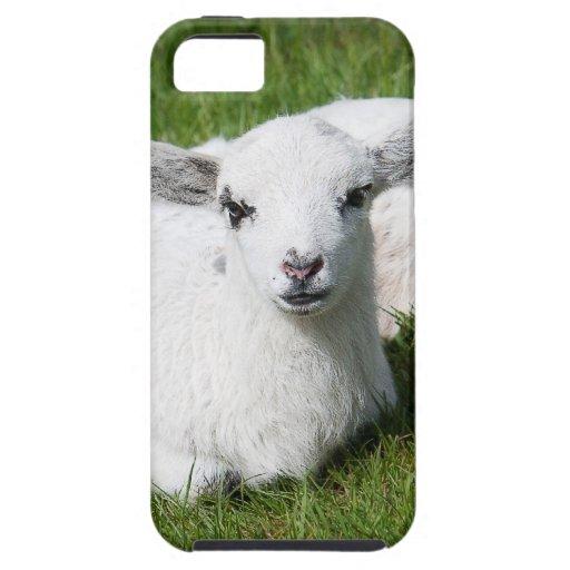 Dos corderos iPhone 5 protector