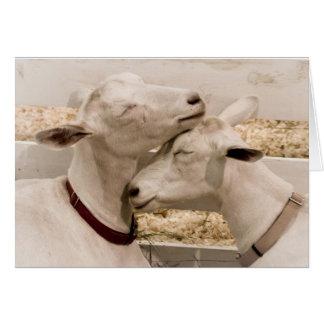 Dos de un par cariñoso bueno de la cabra felicitación