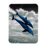 Dos delfínes que nadan en el mar iman