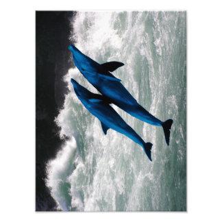 Dos delfínes que nadan en el mar impresiones fotográficas