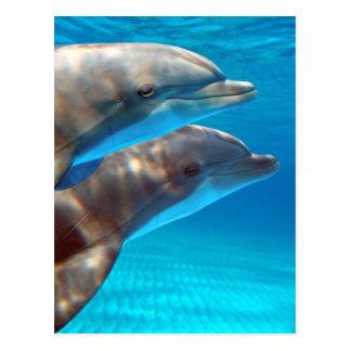Dos delfínes que nadan postales