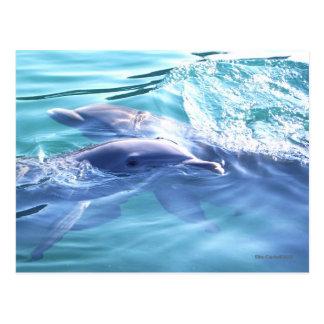 Dos delfínes que nadan tarjetas postales