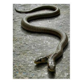 Dos dirigieron la serpiente postales