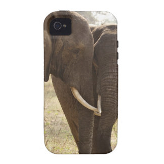 Dos elefantes africanos de Bush (Loxodonta African iPhone 4/4S Fundas