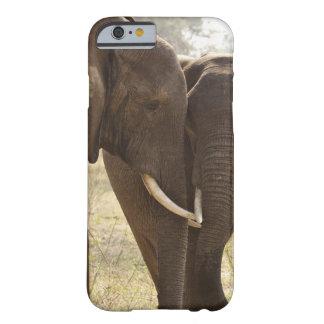 Dos elefantes africanos de Bush (Loxodonta Funda De iPhone 6 Barely There
