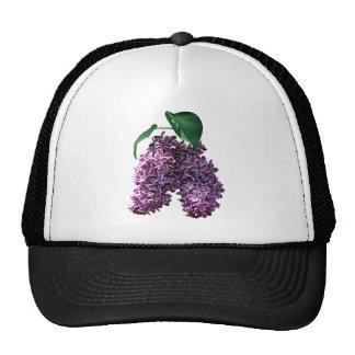 Dos entonaron lilas gorra