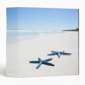 """Dos estrellas de mar azules en el borde del agua carpeta 1 1/2"""""""
