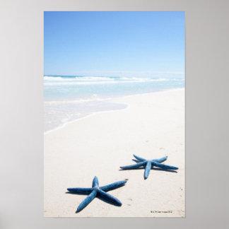 Dos estrellas de mar azules en el borde del agua e póster