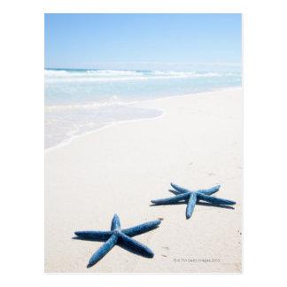 Dos estrellas de mar azules en el borde del agua postal