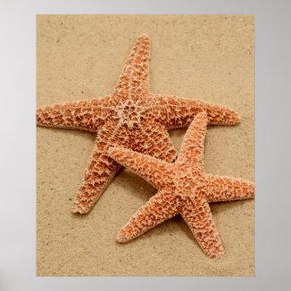 Dos estrellas de mar del azúcar póster